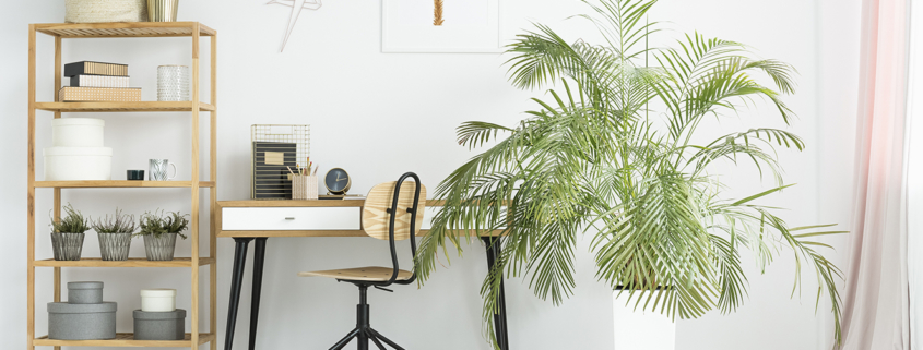 06 melhores tipos de plantas para ter no seu escritório